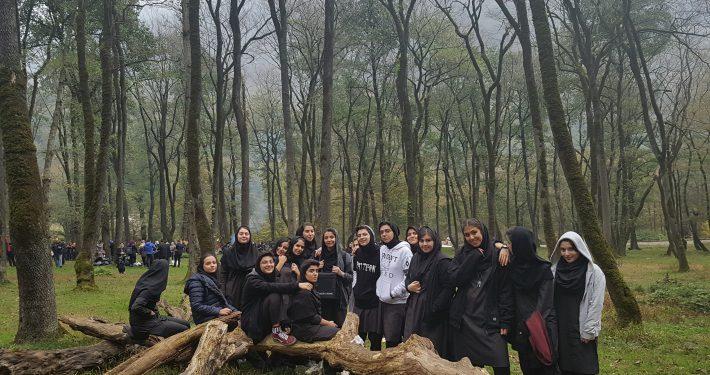 جنگل فیروزکوه 0